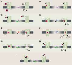 optical switches for remote and noninvasive control of cell