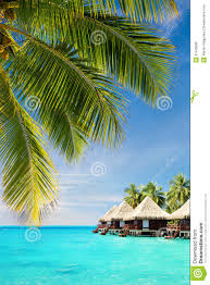 coconut palm tree leaves over ocean with bungalows royalty free