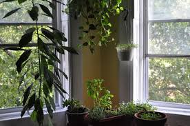 decorative plants for home simple money plant decoration in home