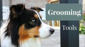 shedding an australian shepherd essential grooming tools for australian shepherds youtube