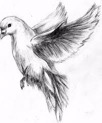 turtle dove clipart flight sketch pencil and in color turtle