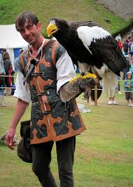 stellers sea eagle wallpapers falconer with steller sea eagle bird beautiful birds and animal