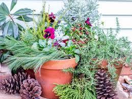 container gardening ideas pictures u0026 videos hgtv