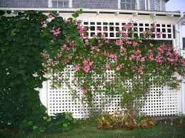 top climbing rose trellis design u2013 outdoor decorations