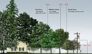 planting small trees power lines julie orr design