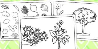 plant colouring sheets plants plant sheets colouring sheets