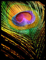 peacock feather wallpaper for mobile pesquisa google feathers