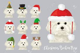 festive collection of bichon frise puppy dogs