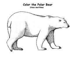 preschool polar bear coloring pages print nob6i