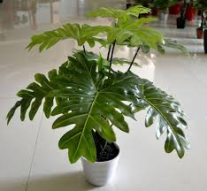 artificial decorative trees for the home wholesale 2pcs lot taro leaves plants artificial tree artificial