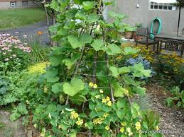 Growing Melons On A Trellis Choose The Right Trellis For Your Climbing Vegetables Tenth Acre