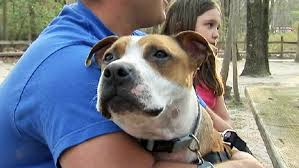 new jersey family sets out to adopt new finds beloved pet lost