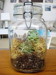 how to plant a terrarium in a jar terraria planters and window