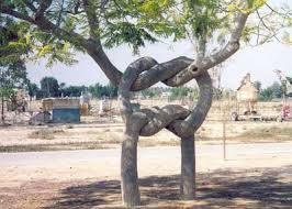 look at this strange and unique trees