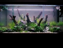 Green Machine Aquascape Aquascaping World Magazine Design Attractive Aquascaping Layouts