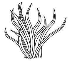 sea plants coloring pages animal food grass coloring pages animal food grass coloring pages