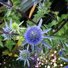 nation of gardeners blog mr fothergills co uk