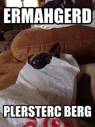 Lol Cat Meme - lolcat i made of my cat loki making an ermahgerd face meme guy