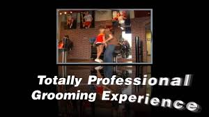 knockouts houston haircuts for men salon for men gentlemen spa
