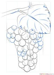 how to draw grapes step by step drawing tutorials