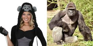 Zoo Animal Halloween Costumes 9 Inappropriate Halloween Costumes 2016 Oddee