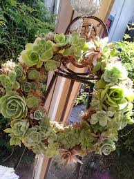 324 best succulent wreaths balls containers other succulent