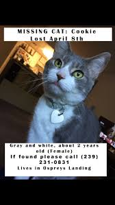 Missing Cat Meme - lost found dogs cats and pets in naples fl 34145 page 1