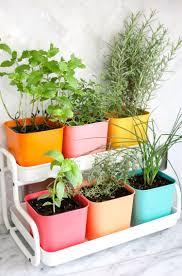 herb garden indoor fabulous indoor herbs on fresh herb garden indoor on uncategorized