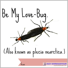 free printable love bug fact valentines suzy homeschooler