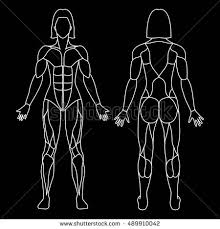 Anatomy Of Women Body Female Anatomy Stock Images Royalty Free Images U0026 Vectors