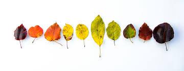 make a wax paper leaf pressing