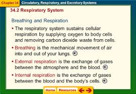 chapter 34 circulatory respiratory ppt video online download