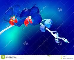 Blue Orchid Flower - blue orchid flower blue stock photo image 47130949