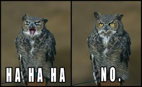 Owl Memes - adorably sinister owl memes beat cat memes any day