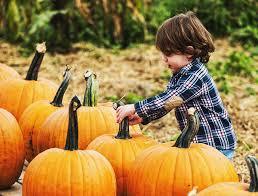 10 things to do around toronto thanksgiving weekend savvymom