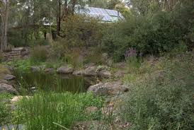 small native plants for australian gardens wattle glen sam cox landscape mallee design