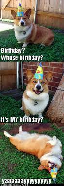 Corgi Birthday Meme - i has a hotdog happy birthday to me i has a hotdog dog