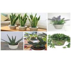 Bedroom Plants 12 Plants That Create Positive Energy In Your Home