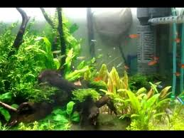 Aquascape Fish Aquascape Fish Jungle Indonesia Youtube