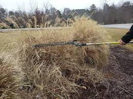 pruning pas grass ivey league landscapes llc