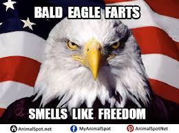Freedom Eagle Meme - bald eagle memes