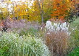 ornamental grass gardening the gardener s