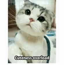 Cuteness Overload Meme - 25 best memes about cute overload cute overload memes