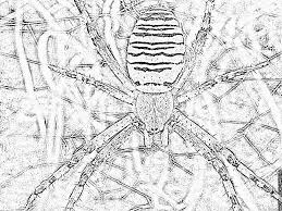 spider has coloring pages printable u0026 free wasp spider