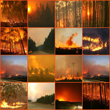 Wildfire Dorothy Mp3 by Music Videos Chessalee