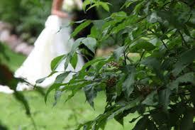 trellis outdoor wedding ceremonies wedding venue costs the hitch