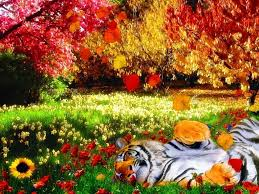 Colors Tropical Colors Images Colors Hd Wallpaper And Background Photos