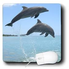 unique dolphin gifts office gifts dolphin gifts and ideas for your dolphin lover