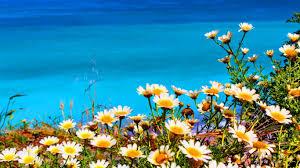 River Bed Definition Beaches White Flowers Riverbed Green Leaves Wallpaper Pictures