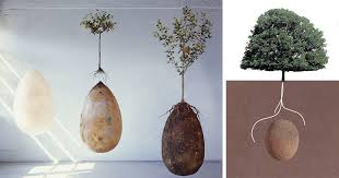 no more coffins these organic burial pods turn cemetery into a forest